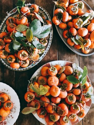 persimmons-galore