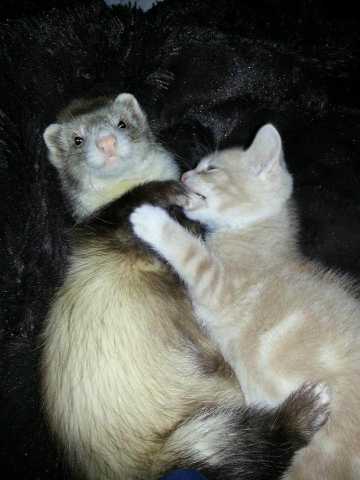 kitten288888