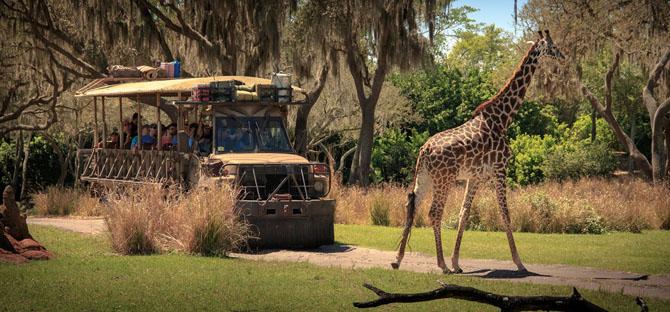 США. Флорида. «Королевство животных» Всемирного центра отдыха Уолта Диснея.