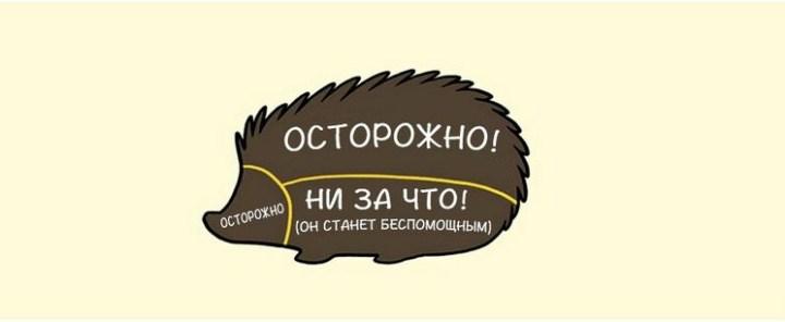 kak-nuzhno-gladit-zhivotnyx_5_1