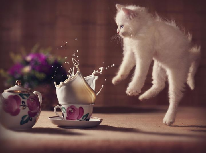 Jumping-Cats__880