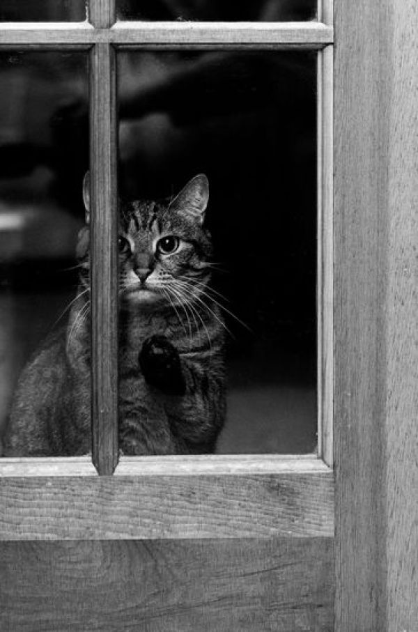 animals-looking-through-the-window-12_result