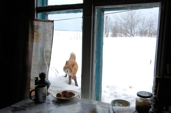 animals-looking-through-the-window-17_result