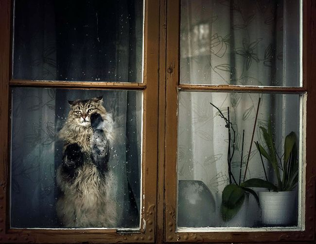 animals-looking-through-the-window-4_result