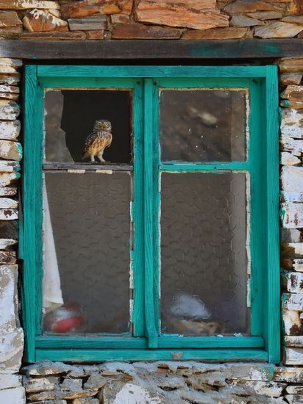 animals-looking-through-the-window-7_result