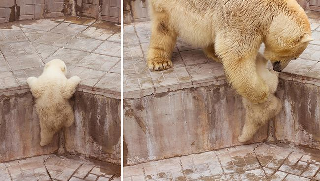 bear-photography-36_result
