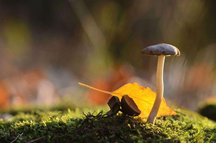 mushroom-photography-vyacheslav-mishchenko-17_result