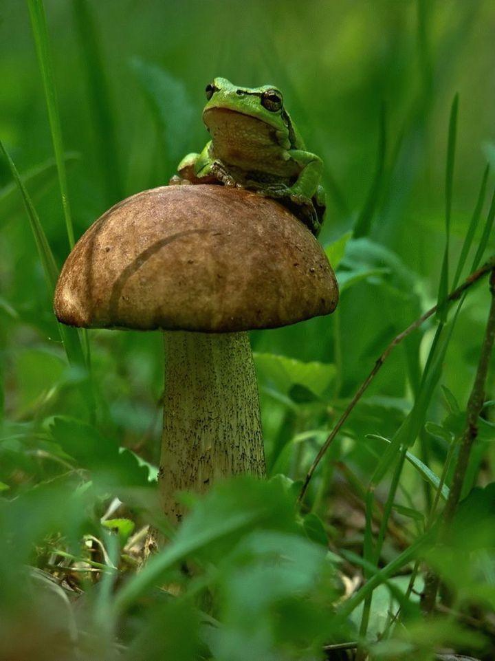 mushroom-photography-vyacheslav-mishchenko-24_result