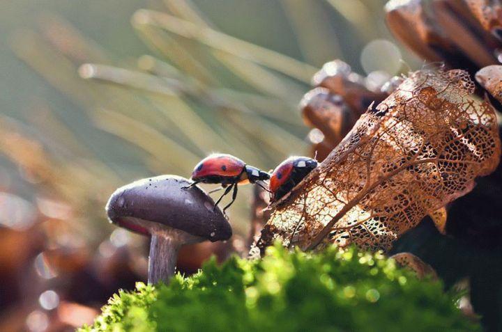mushroom-photography-vyacheslav-mishchenko-34_result