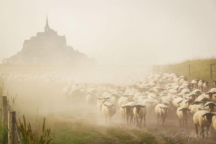sheep-herds-around-the-world-16_result