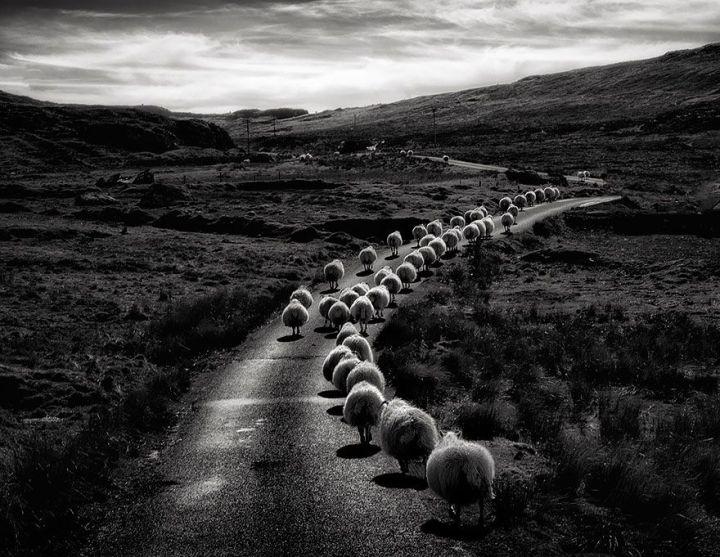 sheep-herds-around-the-world-2_result