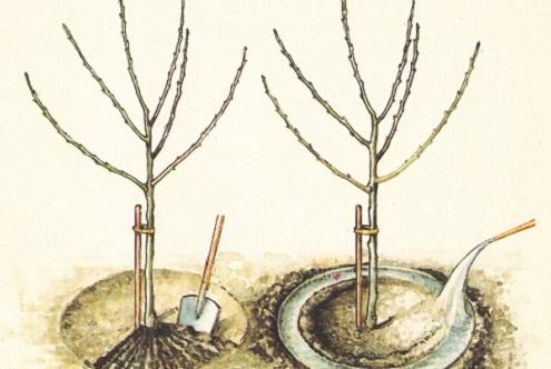Рассказ осенние работы в саду. Календарь садовода: основные работы в саду осенью. Работы в саду в сентябре