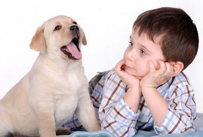 Я мечтаю о щенке