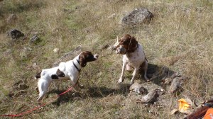 Kacie and Angus debate the chukar