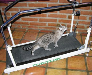 Cat and treadmill