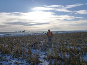 Pheasant hunting in the snow