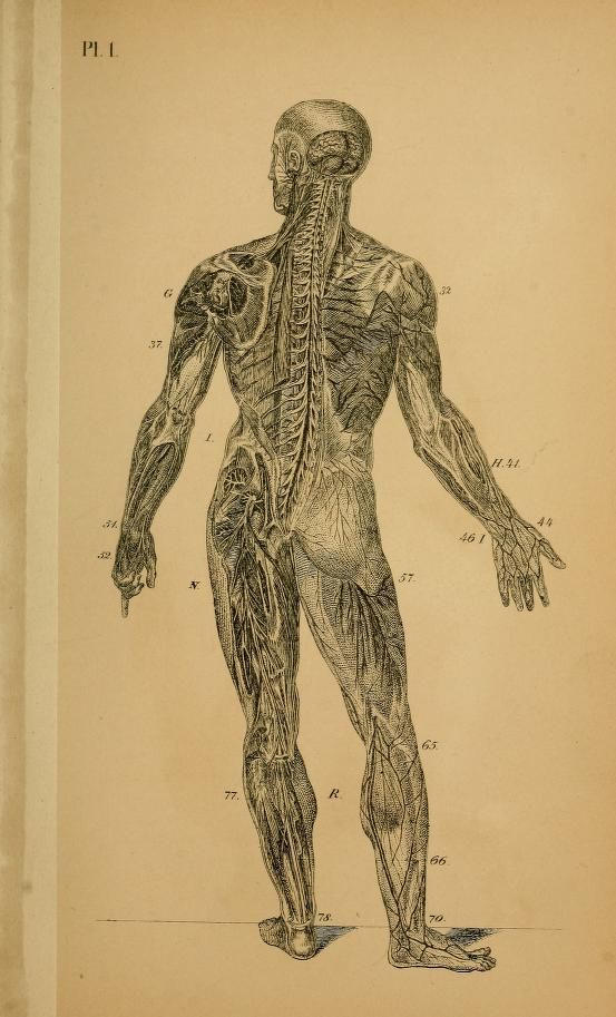 "nemfrog: "" Plate 1. Brain, spinal cord and nervous system. They are not dead. 1879. """