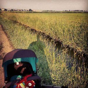Lone wolf and cub. #italianricepaddies http://ift.tt/1h4Wqlw