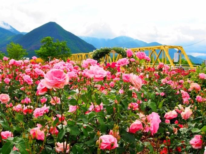 第11回ばら祭り2016 さかき千曲川バラ公園