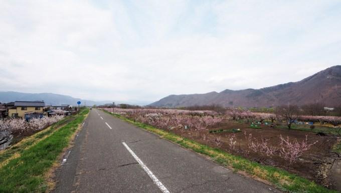 長野県千曲市若宮サイクリングロードあんずの里