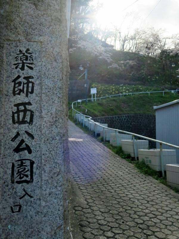 千曲市上山田温泉お薬師西公園桜スイセン