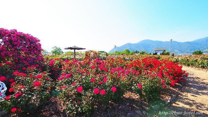 坂城町ばらまつりさかき千曲川バラ公園
