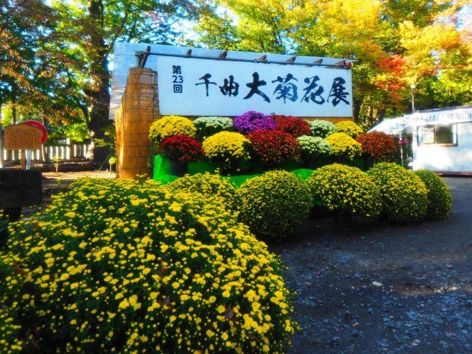 第23回千曲大菊花展武水別神社