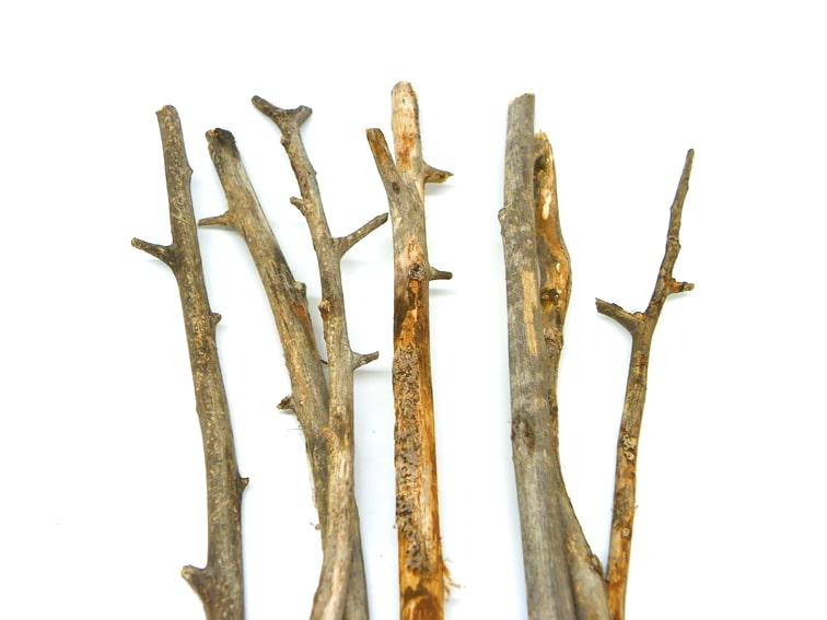 ramas secas