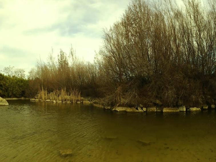 imagen de un lago en un parque publico con filtro