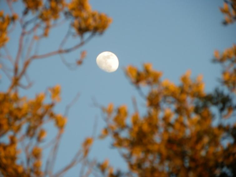monte de el pardo vista de la luna antes del anochecer