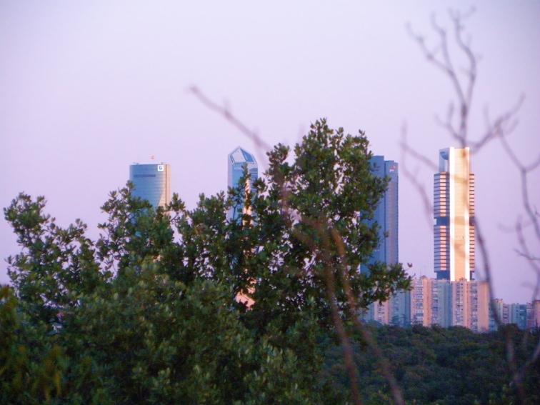 monte de el pardo vista de las torres