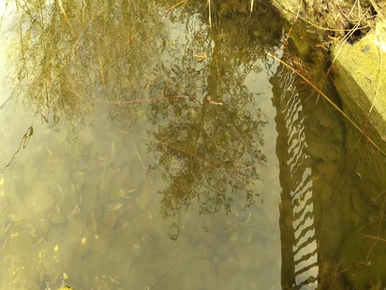 imagen de los reflejos en un lago sin filtro