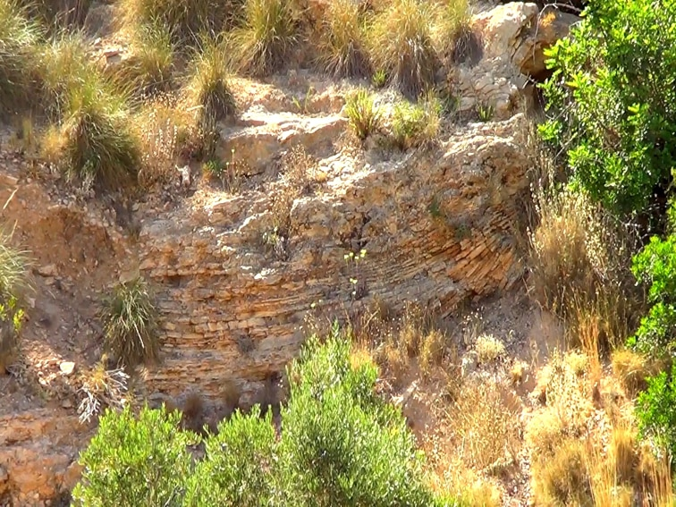 corteza rocosa en la pared del barranco de la tia amalia santa pola