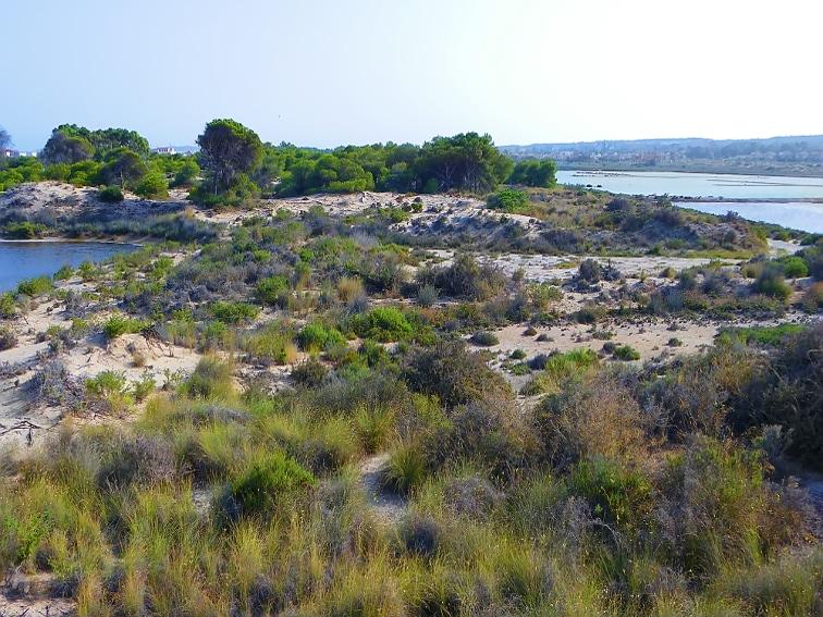pequeño lago a la izquierda y a la derecha balsas salineras del parque natural de las salinas de santa pola