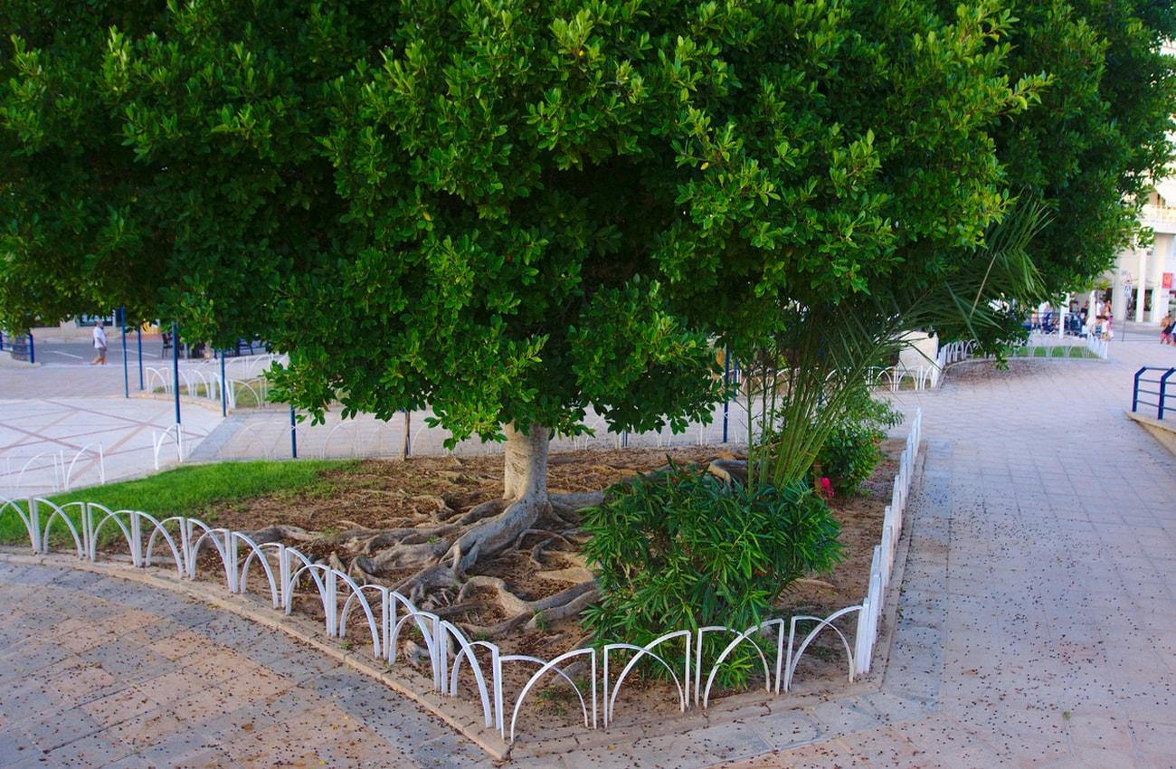 plaza de la comunidad valenciana santa pola