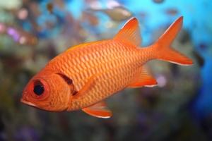 美麗海生物圖鑒   沖繩美麗海水族館 - 沖繩美麗海 世代相傳