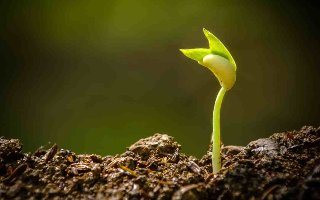 3 Questions About Church Growth
