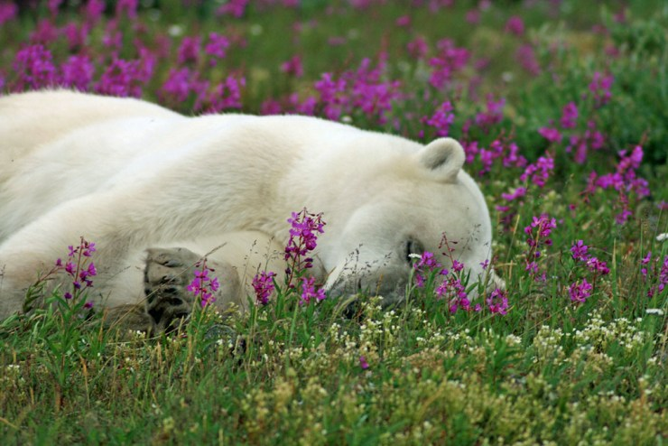 A nap in the flowers.