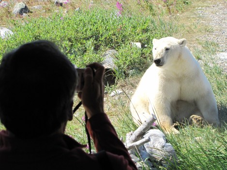 photographing-polar-bear-from-window-seal-river-heritage-lodge