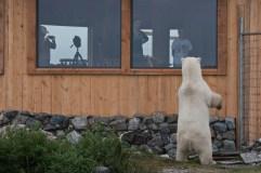 polar-bear-at-window-seal-river-heritage-lodge