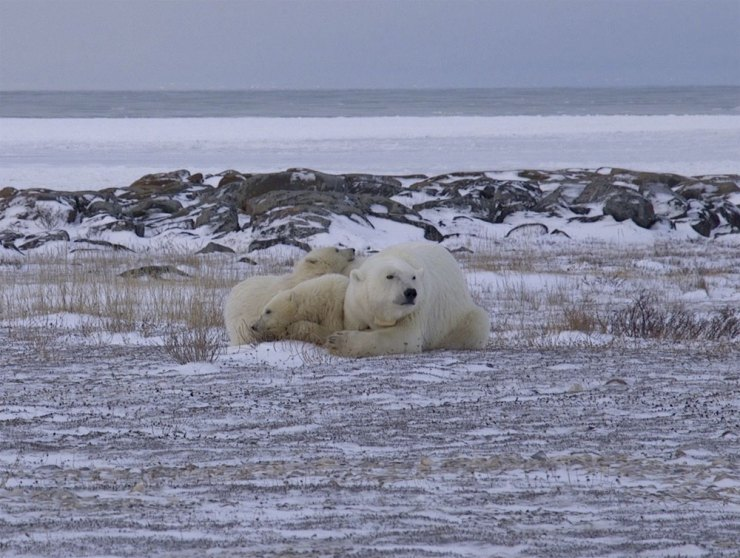 polarbearmarathoncheerleade