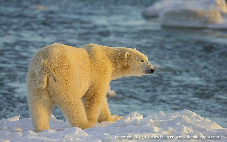 Icescapes, seascapes and polar bears.
