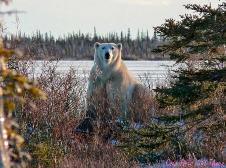 The Great Ice Bear. Scarbrow at Dymond Lake Ecolodge.