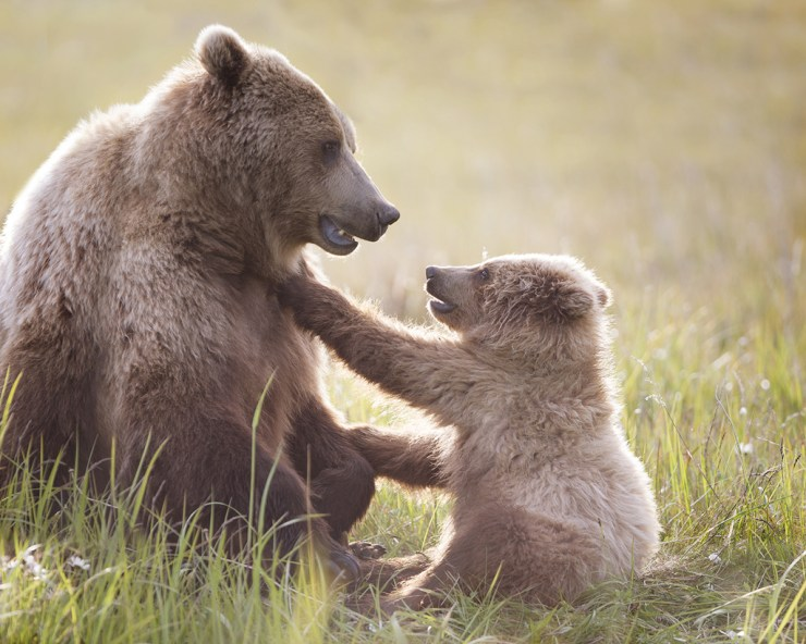 """Personality in a photo. """"Pav"""" and her cub. Ruth Elwell-Steck photo."""