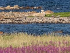 polarbearcubsincolour