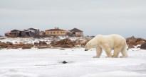polarbearsealriverlodge