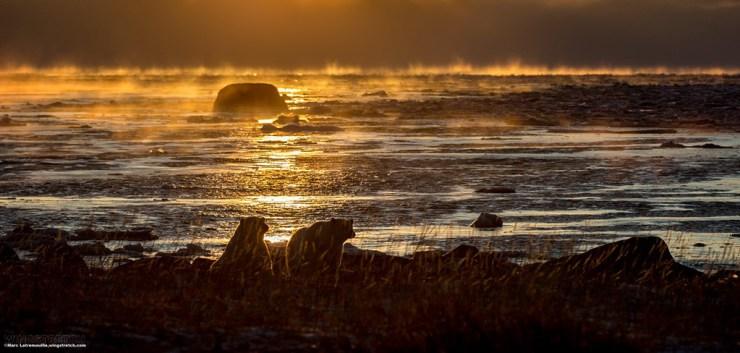 Polar bears in the ice mist at sunset.