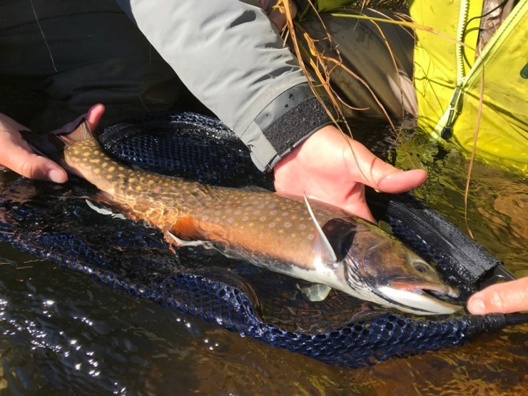 Twenty-inch plus native and sea-run brook trout are common at Nanuk.