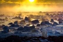 Polar bear in ice fog at Seal River Heritage Lodge. Howard Sheridan photo.