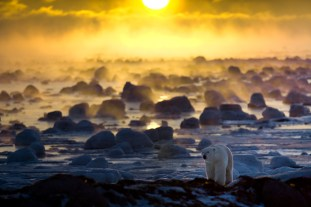 Polar bear in ice fog at Seal River Heritage Lodge. Howard Sheridan photo.
